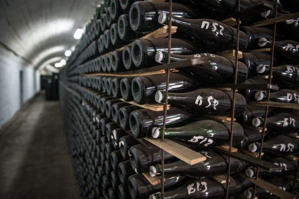 Мексика заявила о планах поставлять в Россию вино