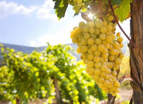 Аксенов: мелкие производители вина в Крыму получат лицензии до конца года