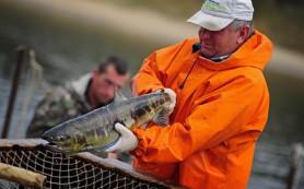 Правительство РФ создало комиссию по вопросам развития рыбохозяйственного комплекса