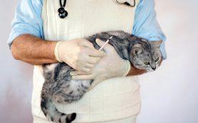 Особенности лечения заболеваний кошек в клинике «Био-Вет»