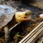 Чем можно кормить черепах?