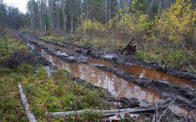 Счетная палата выявила ущерб от незаконной вырубки леса на 11,9 млрд рублей