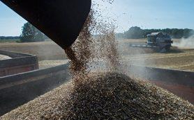 В Совфеде опасаются дефицита качественного зерна в России