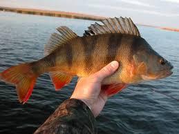 Чем интересна рыбалка в Астрахани