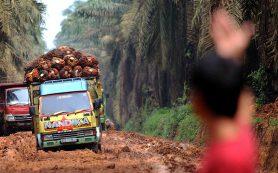 Россельхознадзор предложил взять под контроль пальмовое масло