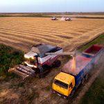 Минсельхоз: Через пять лет Россия полностью себя обеспечит едой
