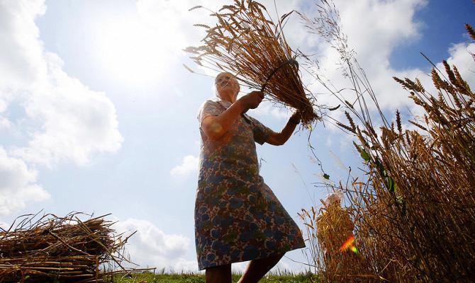 Рекорд века: Россия накормит весь мир