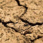 В Минсельхозе России сообщили, как в Крыму решат ситуацию с засухой