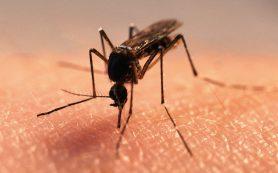 Как бороться с комарами летом?