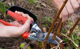 Санитарная обрезка плодовых деревьев осенью