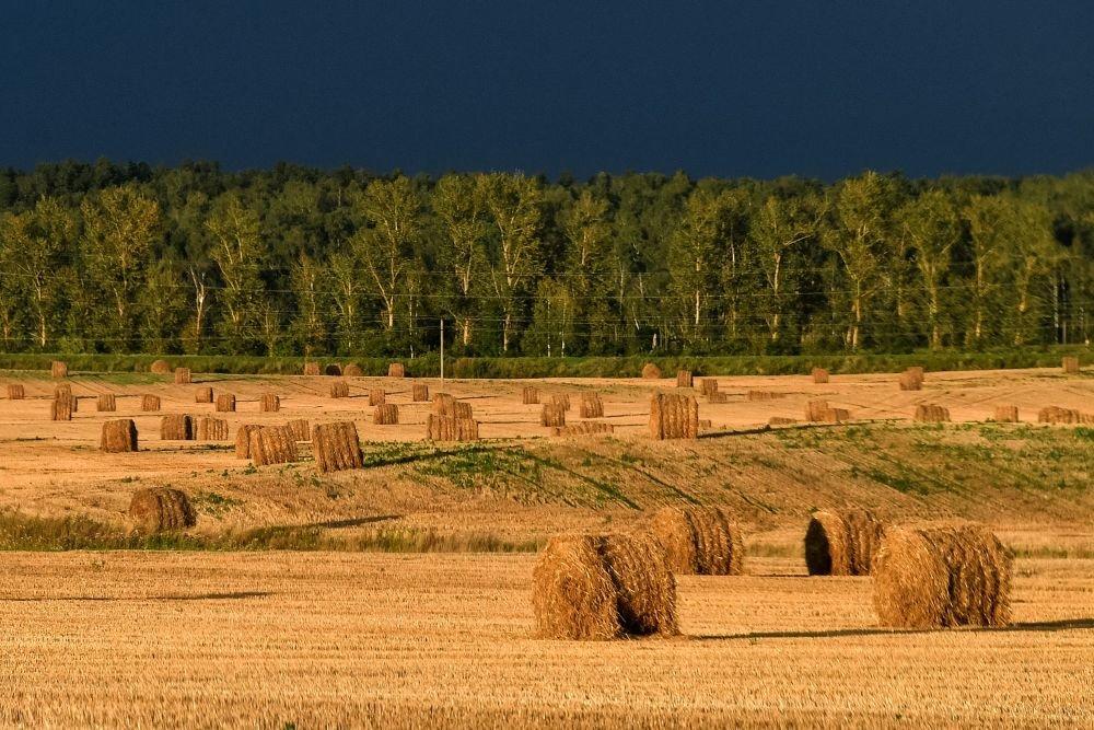 Владельцев земли обязали содержать мелиоративные защитные лесополосы
