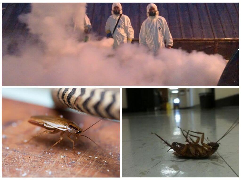 Уничтожение тараканов санэпидемстанцией ГОРСЭС