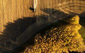 Российские аграрии назвали самую выгодную для них рублевую цену доллара