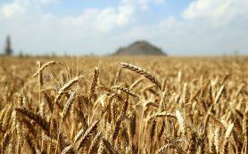 Экспорт агропродукции в 2020 году может быть рекордным