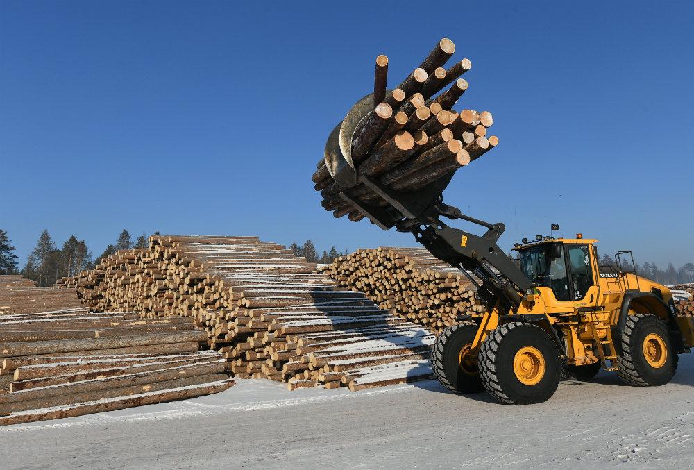 Виктория Абрамченко рассказала о главных проблемах в лесной отрасли