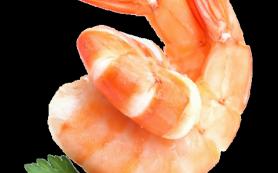 Сушеные креветки оптом от производителя