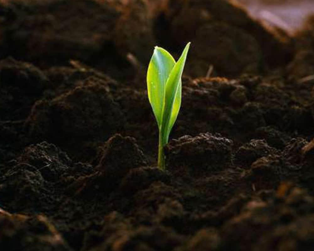 Почва и ее особенности