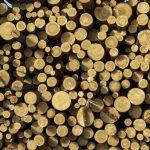 Эксперты прокомментировали запрет на экспорт кругляка из РФ
