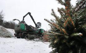 Куда девать новогоднюю елку после праздников