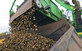 Картофель «экономкласса» может появиться в магазинах России