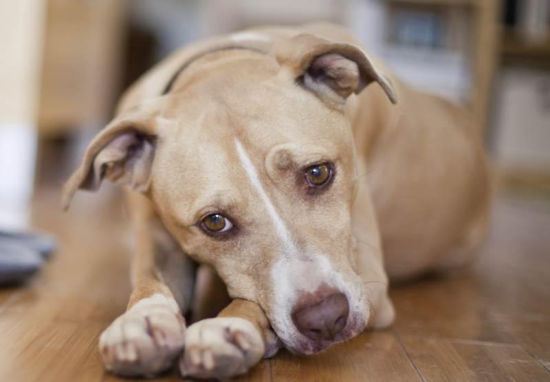 Полезно знать: какие бывают болезни у собак?