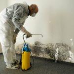 Как обработать стены от плесени