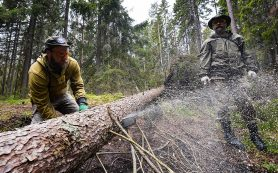Дачников предупредили о «штрафе за деревья»