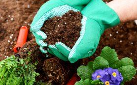 Обзор биопрепаратов, применяемых в органическом природном земледелии