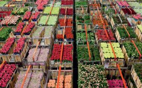 Импорт цветов и бутонов